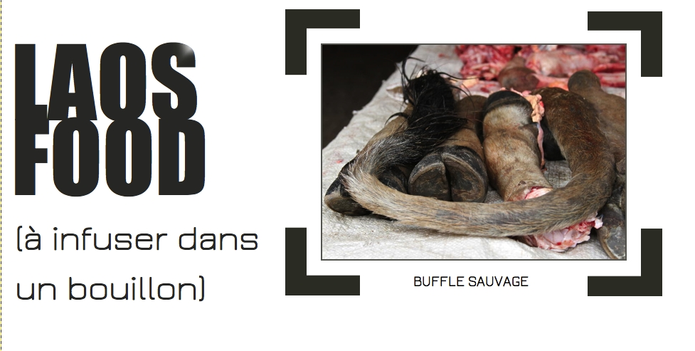 Buffle sauvage nowMadnow